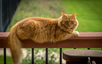 image for High-Rise Syndrome in Cats